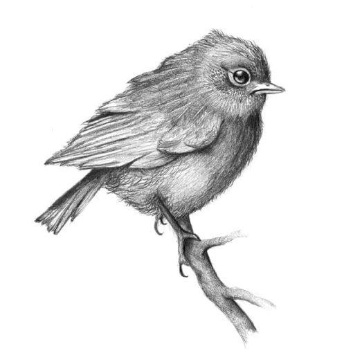 Quirky Bird Close up