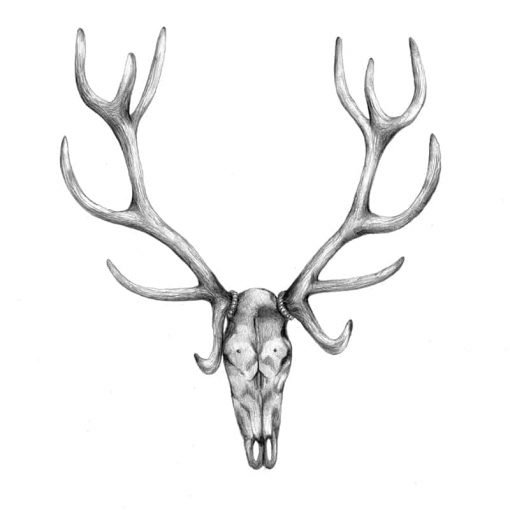 Stag Close Up by Haze Road