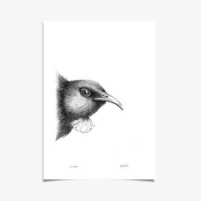 Mr Tui Art Print by Haze Road - Made in NZ