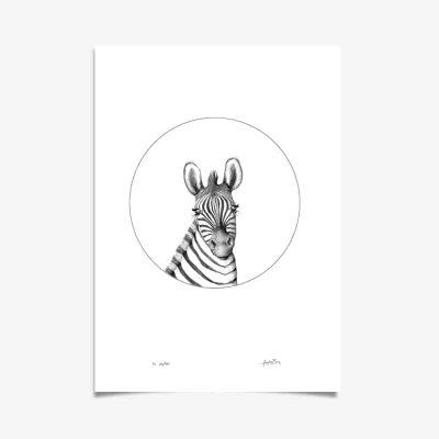 Zebra Art Print By Haze Road